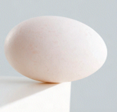 Image of an egg